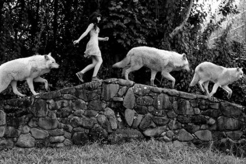 Wolf-Party